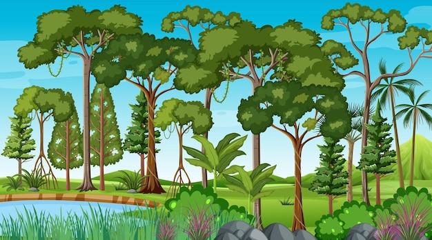 Escena del bosque con estanque y muchos árboles.