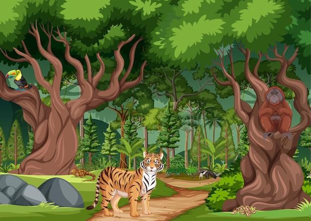 Escena de bosque lluvioso o bosque tropical con diferentes animales salvajes.