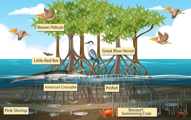 Escena del bosque de manglares y animales con nombre de etiqueta.