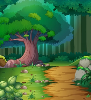 Escena del bosque con pista de senderismo
