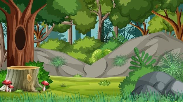 Escena del bosque con varios árboles forestales.