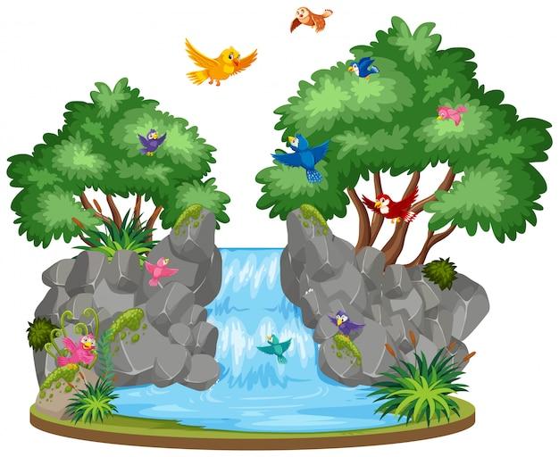 Escena de cascada y pájaros