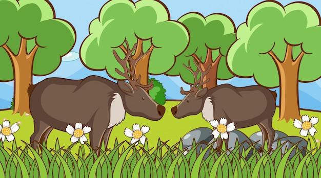 Escena con ciervos en el parque
