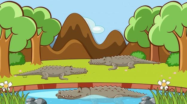Escena con cocodrilos en el estanque