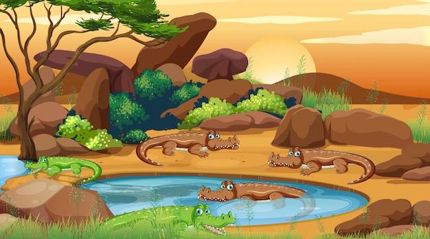 Escena con cocodrilos junto al estanque