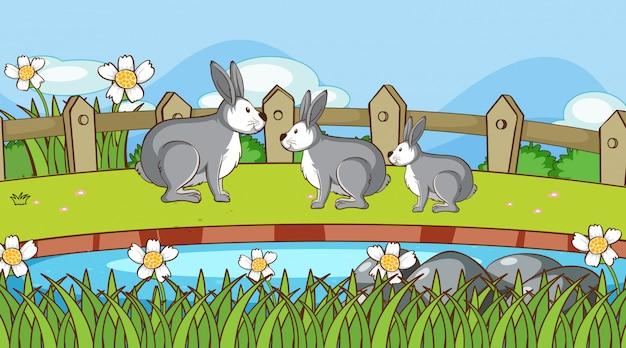 Escena con conejos en el jardín.