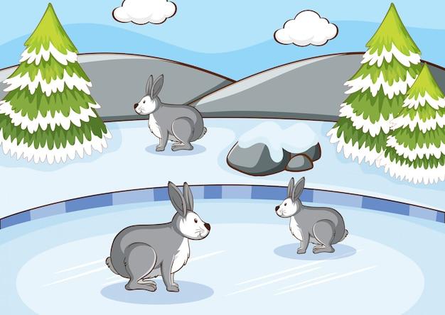 Escena con conejos en la montaña de nieve