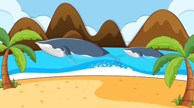 Escena con dos ballenas en el océano.