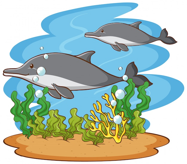 Escena con dos delfines en el océano.