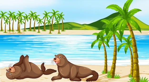 Escena con dos focas en la playa.