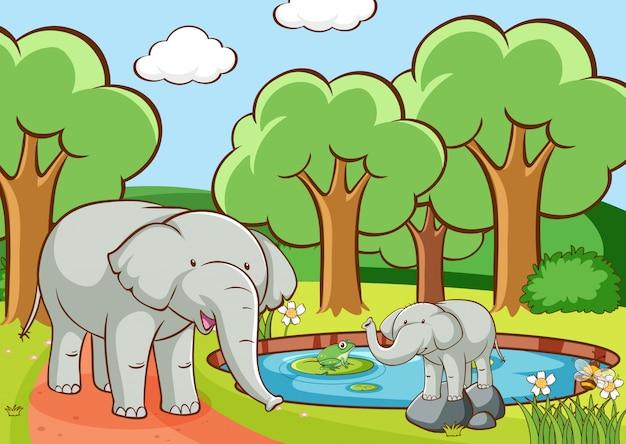 Escena con elefantes en bosque