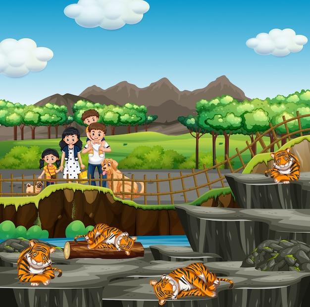 Escena con familia y tigres en el zoológico