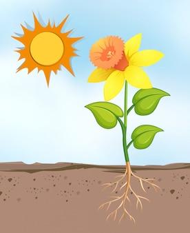 Escena con flores que crecen en el día soleado