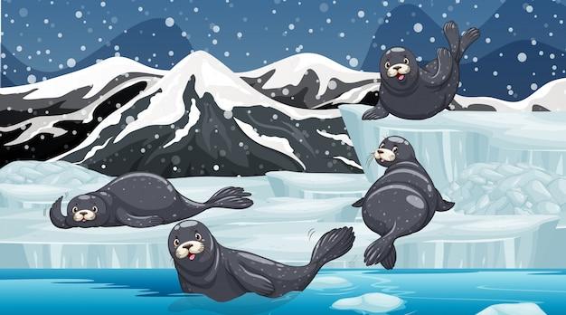 Escena con focas en la montaña de nieve