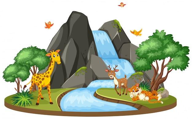 Escena de fondo de jirafa y tigre en la cascada