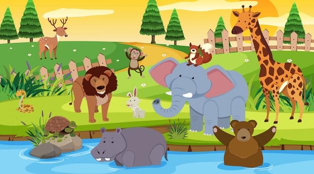 Escena de fondo con muchos animales salvajes en el parque