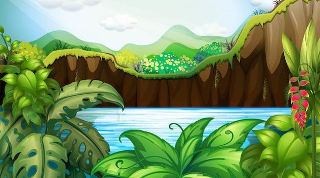 Escena de fondo de la selva al aire libre