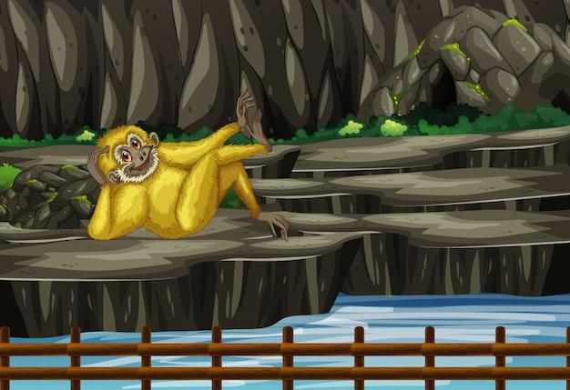 Escena con gibbon en el zoológico