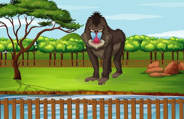 Escena con gran babuino en el zoológico