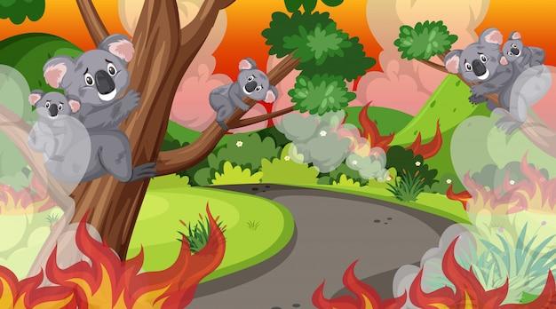 Escena con gran incendio forestal en el bosque y muchos koalas heridos