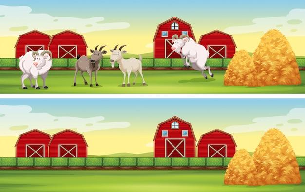 Escena de la granja con cabras y graneros.