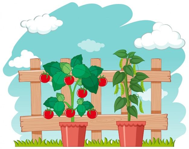 Escena de la granja con cultivo de hortalizas frescas