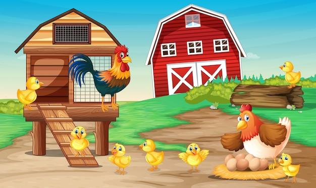 Escena de granja con gallinas
