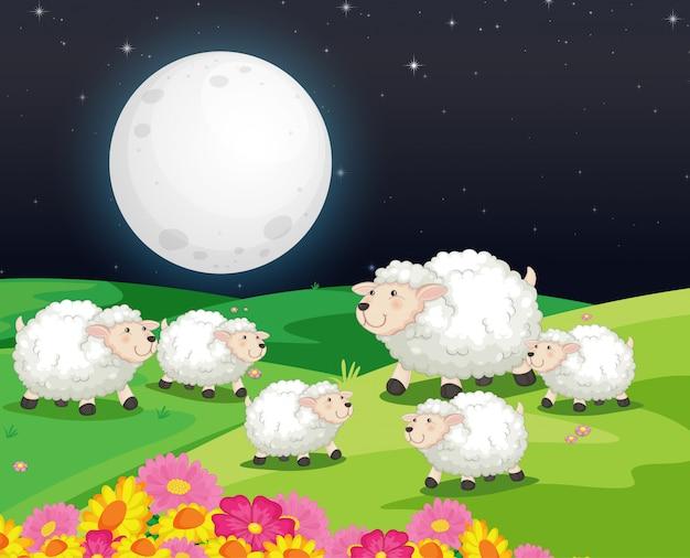 Escena de la granja con lindas ovejas en la noche.