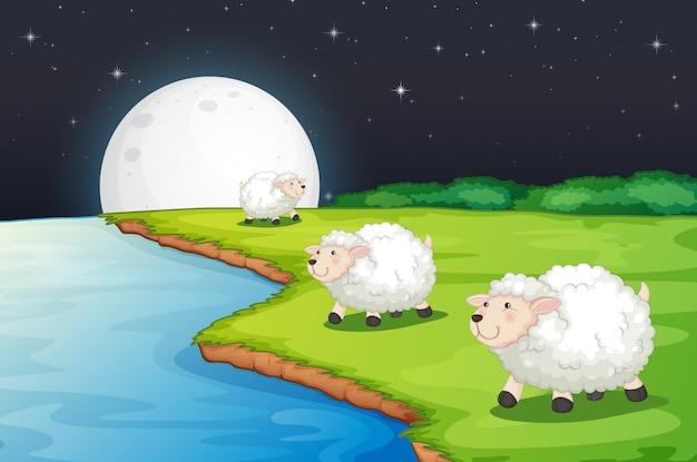 Escena de la granja con lindas ovejas y río por la noche