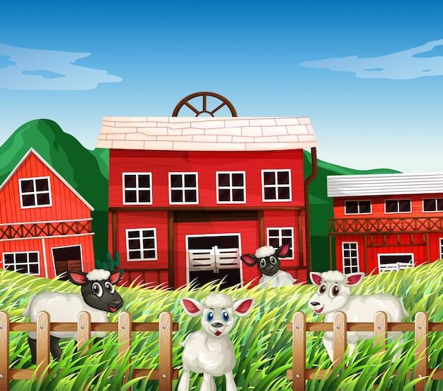 Escena de la granja en la naturaleza con graneros y ovejas.