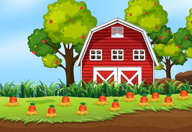 Escena de la granja en la naturaleza con granja de granero y zanahoria