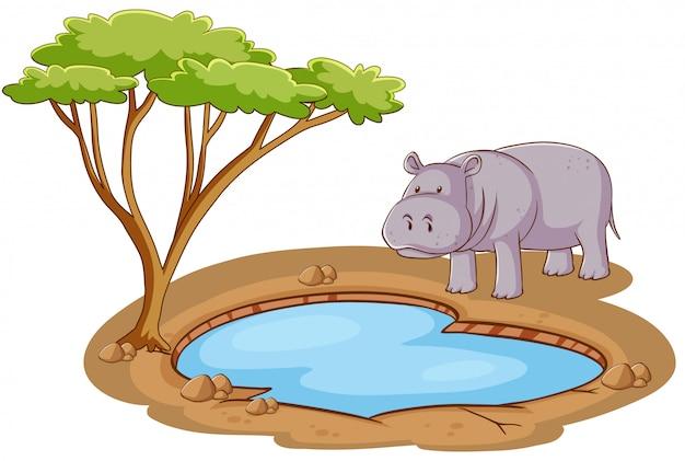 Escena con hipopótamos de pie junto al estanque sobre fondo blanco.