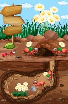 Escena con hormigas y flores en el jardín
