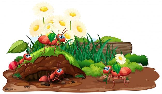 Escena con hormigas y flores en el jardín.