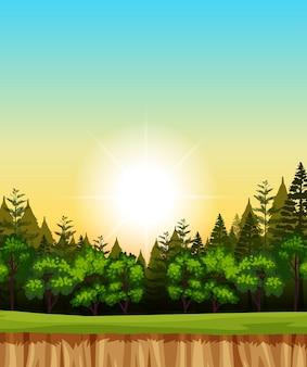Escena de ilustración de cielo de amanecer en blanco con pinos en el bosque