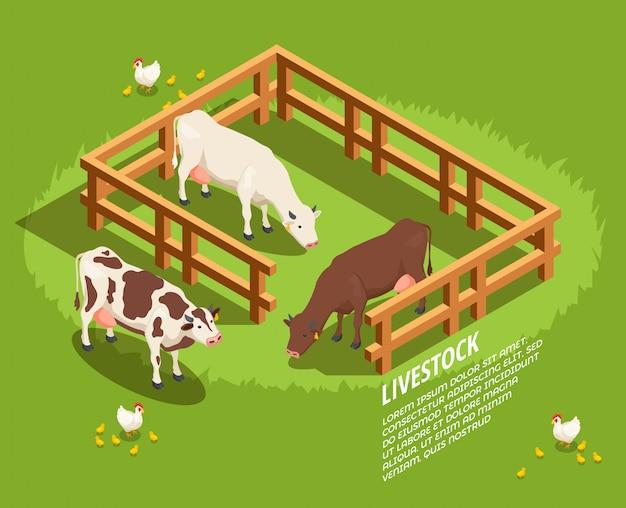 Escena isométrica del ganado