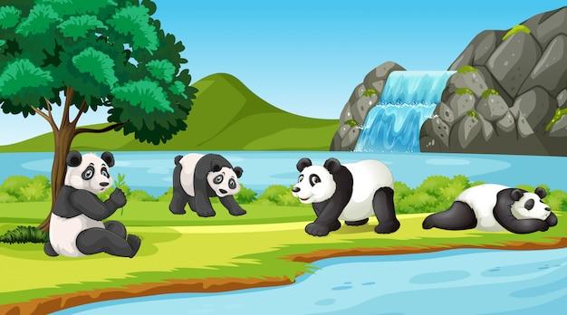 Escena con lindos pandas en el parque