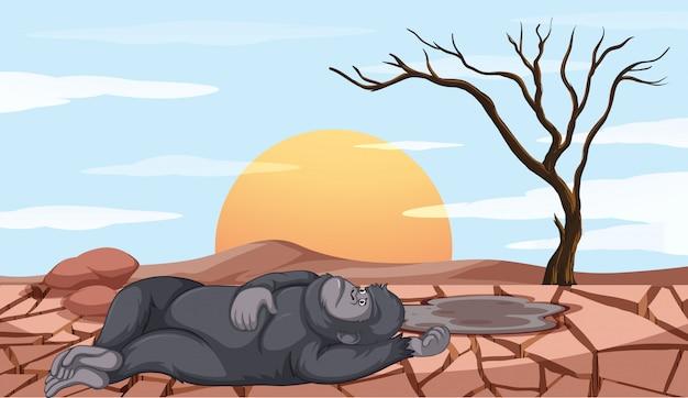 Escena con mono muriendo en tierra de sequía
