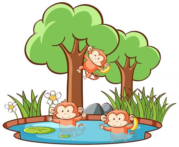 Escena con monos en bosque