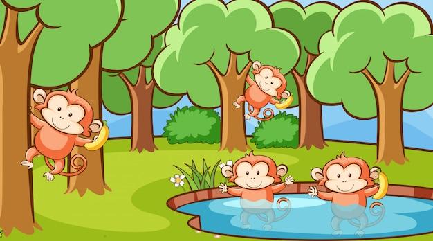 Escena con monos en el bosque