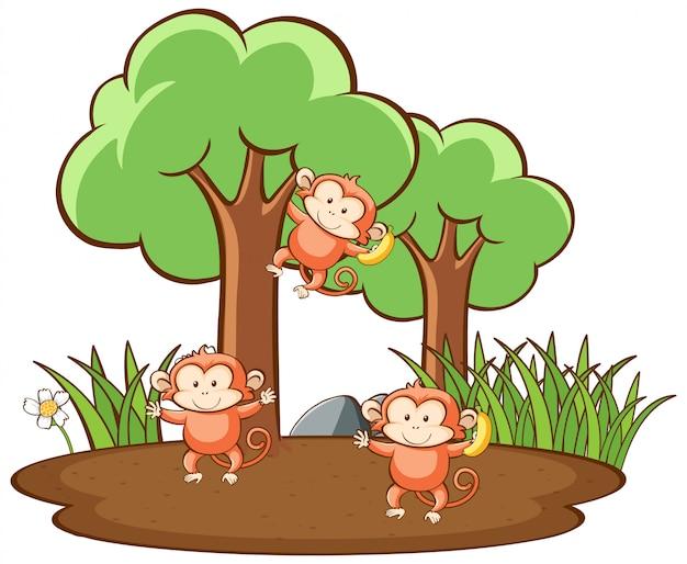 Escena con monos lindos en bosque