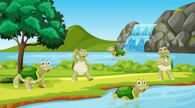 Escena con muchas tortugas en el parque.