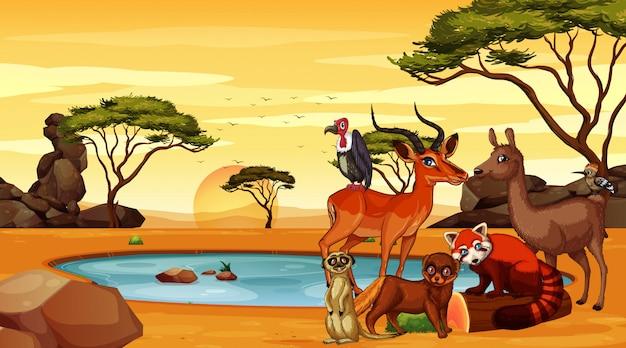 Escena con muchos animales en el campo.