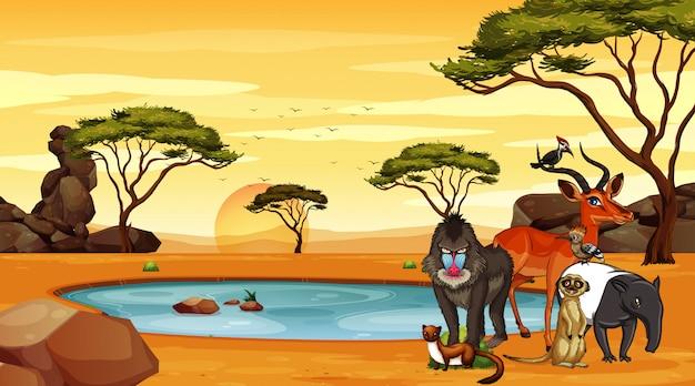 Escena con muchos animales en la ilustración de la sabana