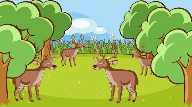 Escena con muchos ciervos en el bosque.