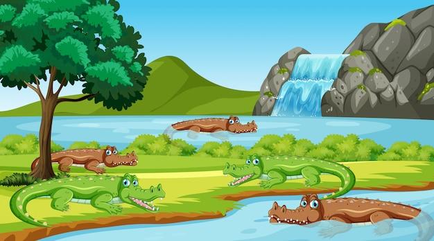 Escena con muchos cocodrilos en el río.