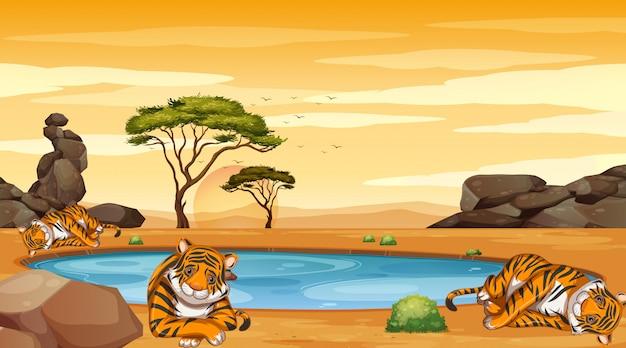 Escena con muchos tigres en el campo.