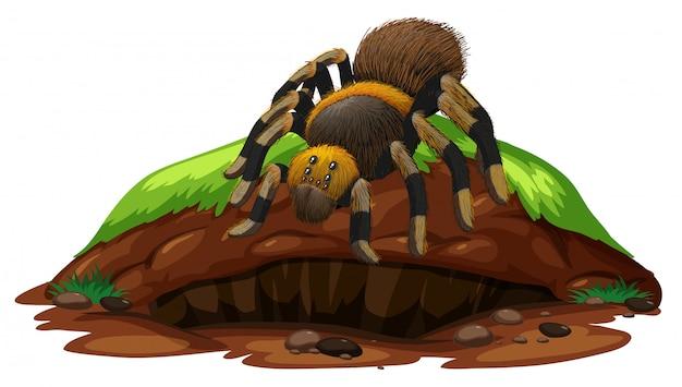 Escena de la naturaleza con araña tarántula sobre roca
