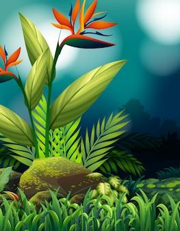Escena de la naturaleza con ave del paraíso en el jardín