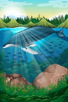 Escena de la naturaleza con ballena bajo el mar.